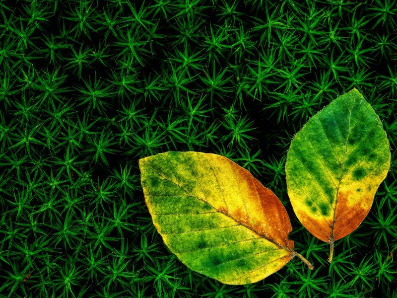 Обои осенние, листья, Трава, два