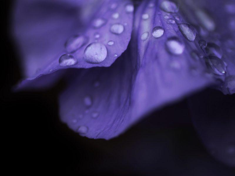 Обои цветочек, капли, роса, Макро, цветок, macro, flower, капля