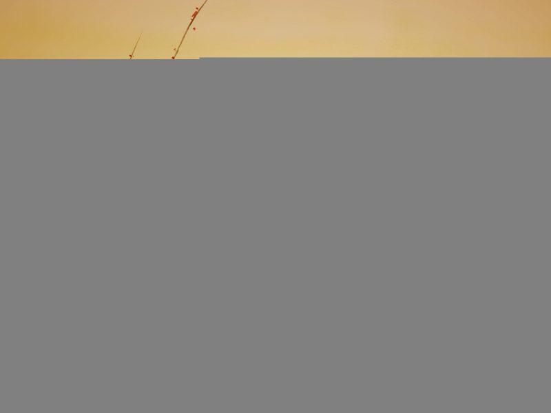 коряга, Китайская живопись, река