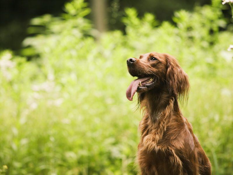 друг, лето, Собака