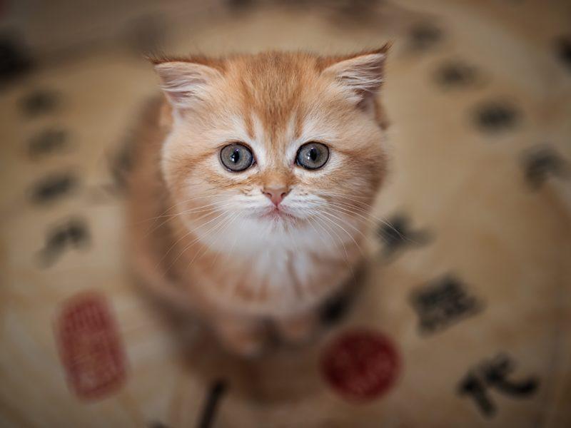 Маленький милый рыжий котенок крупным планом
