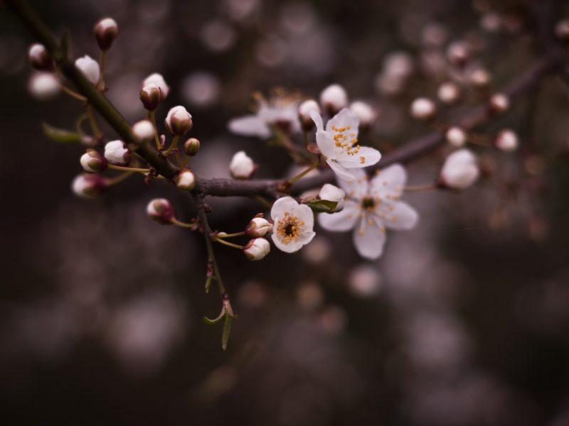 Цветы, Глубина резкости