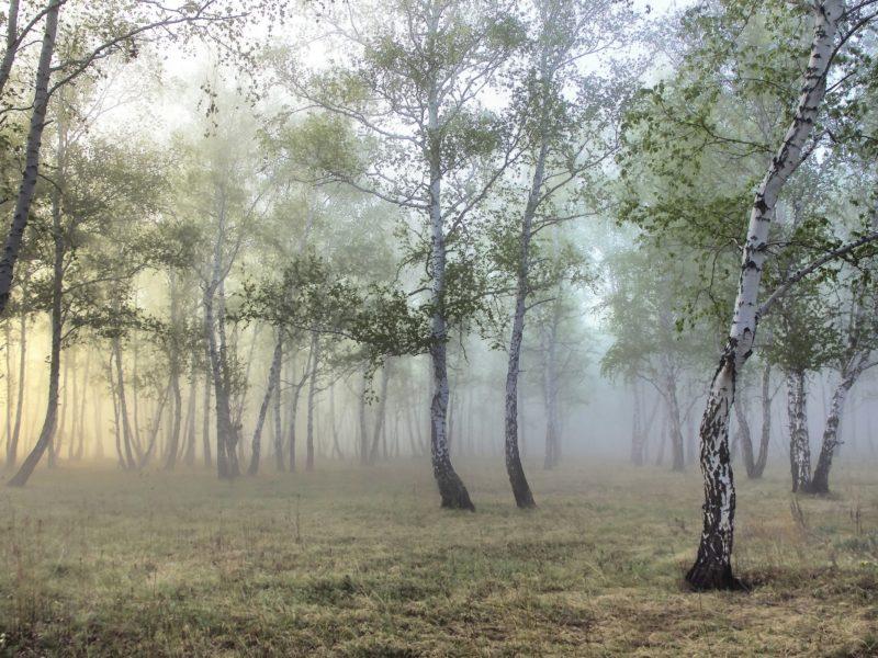 Природа, Деревья, Леса, Туман