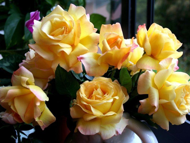 Обои Розы, желтые, цветы, букет, красивые, жёлтые