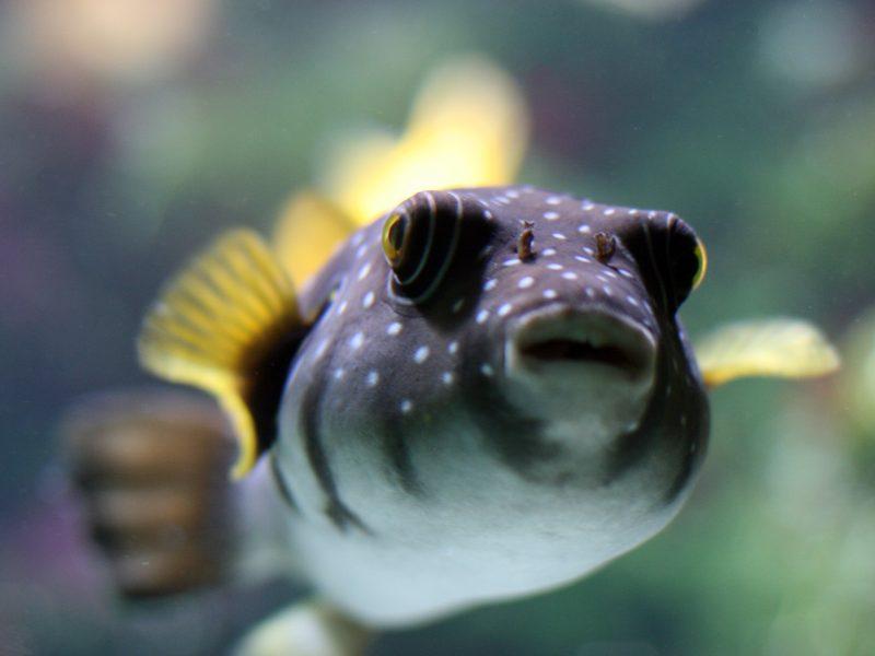 Животные, Рыба