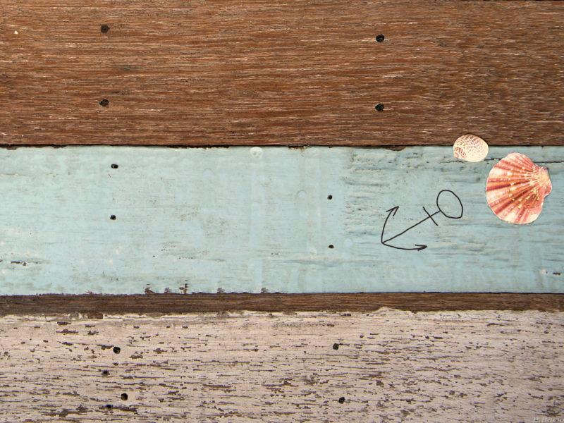 Обои ракушки, морская, тема на рабочий стол.