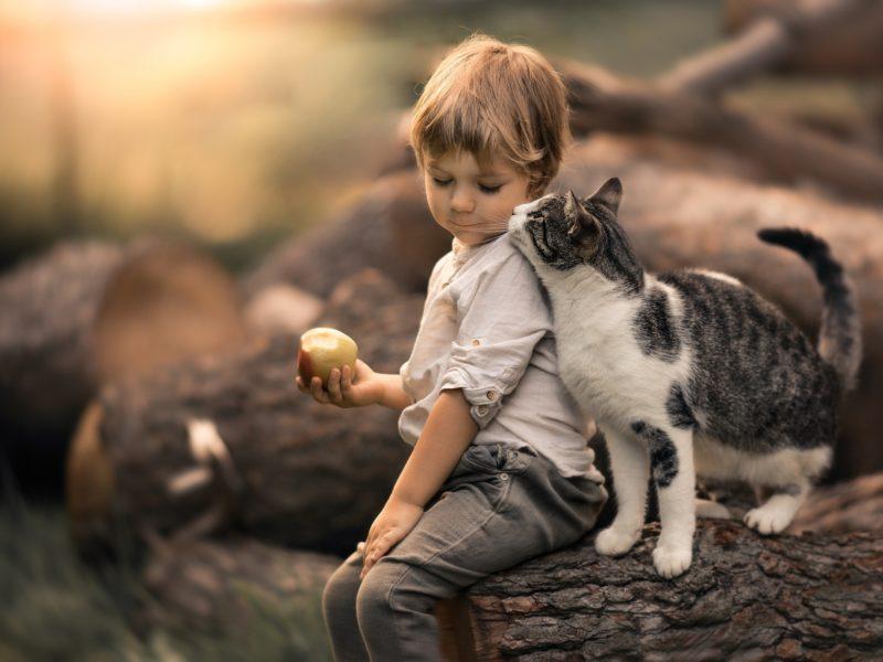 Обои ребёнок, мальчик, малыш, яблоко, животное, кот, кошка, ласка, брёвна для рабочего стола
