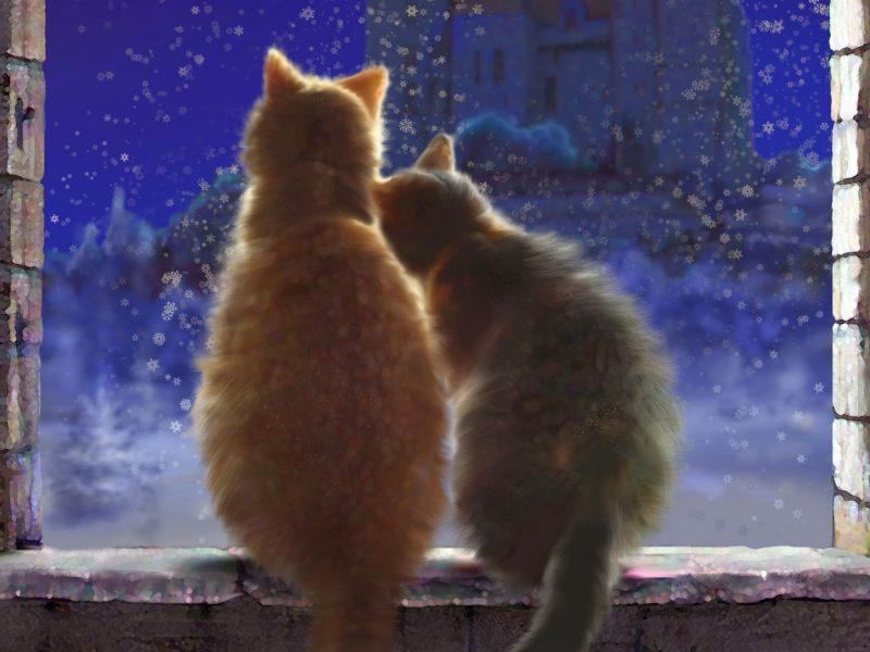 Обои кошки, окно, снег для рабочего стола
