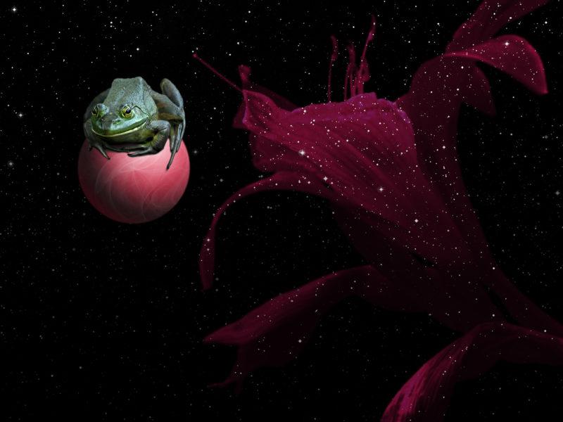 Обои животные.земноводные, лягушка, цветок, космос для рабочего стола