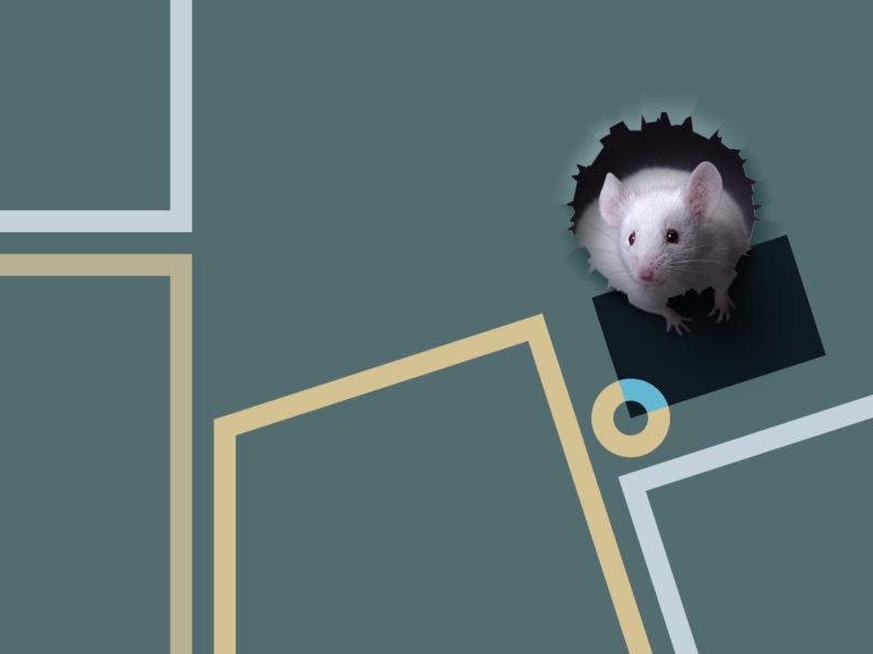 Обои животные, минимализм, мышь, домашние животные, лаконизм, фотография и графика для рабочего стола