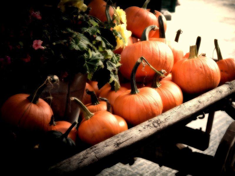 Pumpkins, autumn, orange, fall, cart
