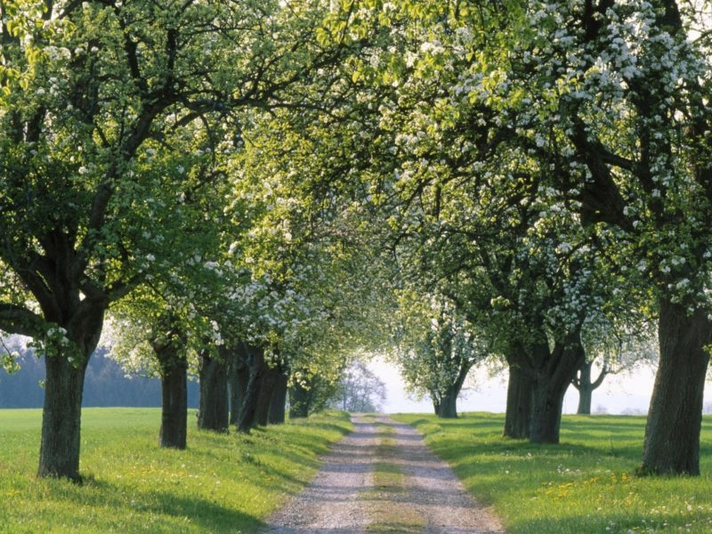 аллея, дорога, пути, путь, Природа, дороги, аллеи
