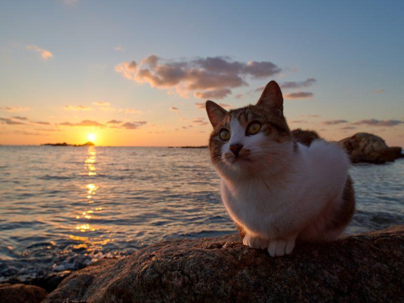 Рыжий кот сидит на камне у моря на закате солнца