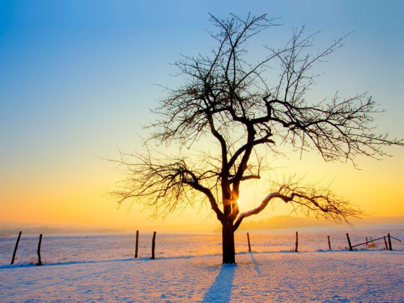 Природа, Зима, Деревья, Заборы