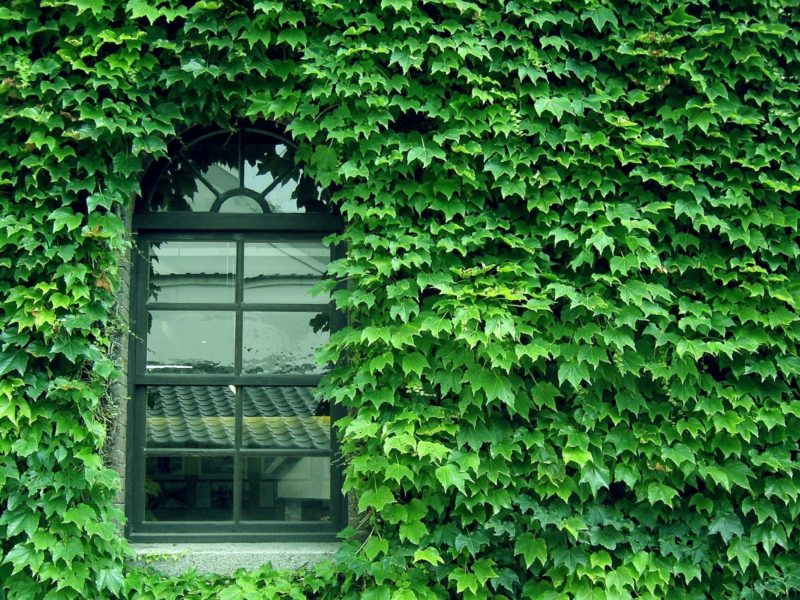 Обои green, Wall, pattern, window, glass