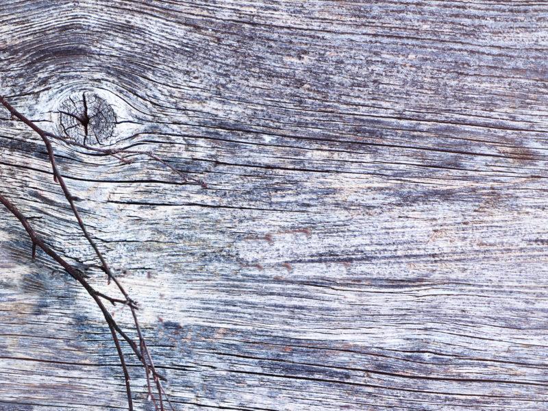 Обои дерево, структура, веточки, весна на рабочий стол.