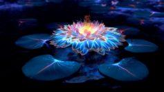 Обои цветок, вода, свет, неон, абстракция для рабочего стола