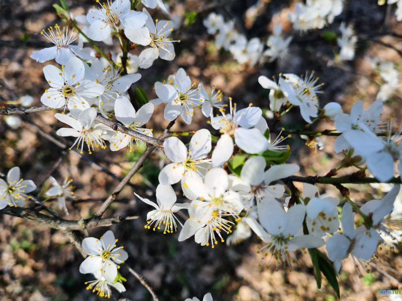 Обои ветка, цветы, обоитут, весна, oboitut, лучи, цветение для рабочего стола