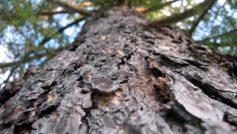 Пейзажи, Природа, Деревья, Макро, Глубина резкости