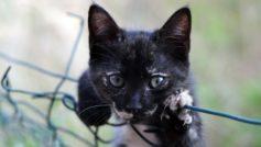 Маленький черный котенок лежит на сетке