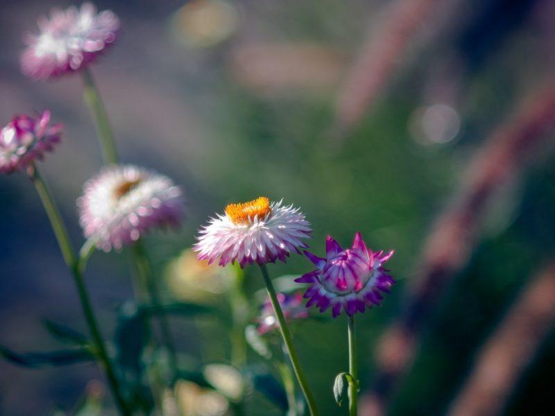 Природа, Цветы, Макро