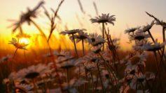Солнце, Цветы, Макро