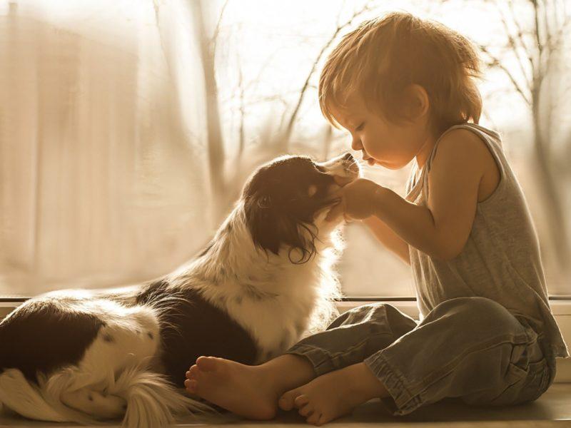 Обои фото, ребенок, собака, друг, позитив на рабочий стол.
