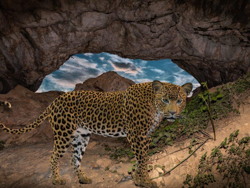Обои леопард, пещера, небо, арт на рабочий стол.
