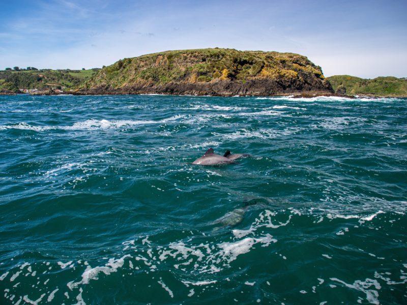 Обои океан, дельфин, берег, скалы на рабочий стол.