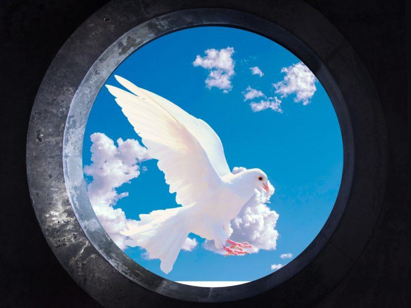 Обои голубь, небо, фон на рабочий стол.