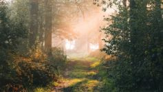 Обои лес, тропинка, ветки, лучи на рабочий стол.