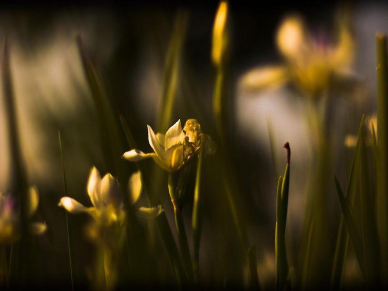 Природа, фото, цветы, обои