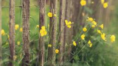 макро, Цветы, растения, забор, ограда, природа, желтый