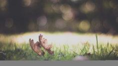 зелень, трава, луг, листья, Природа, макро, растение