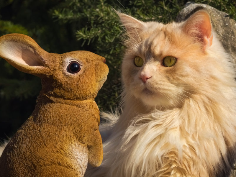 Пушистый рыжий кот сидит в парке со статуэткой кролика