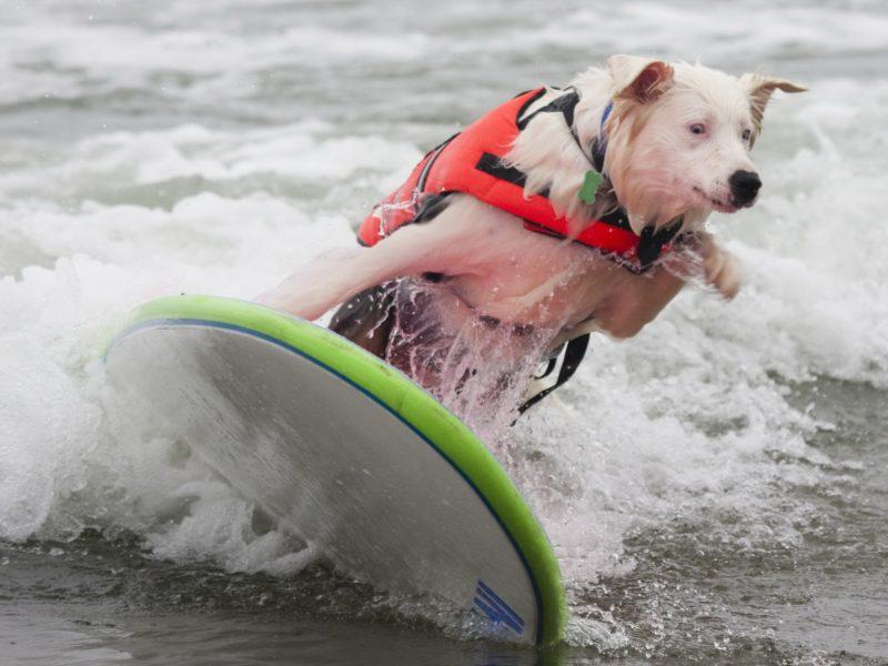 Животные, Собаки, Домашние питомцы, Пляжи