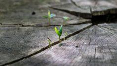 Обои Макро, Растения, Пень, Природа на рабочий стол.