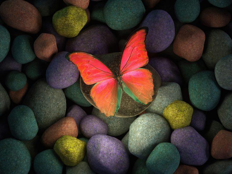 Обои бабочка, камни, artwork на рабочий стол.