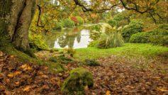 Обои парк, пруд, листья для рабочего стола